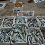 Commission reprimand an opportunity for France and Spain to reform EU fisheries controls